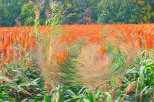 Picture 1 folder 010Psykopaintedfield