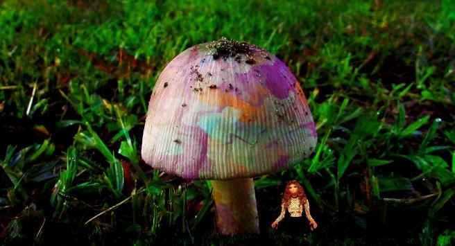 mushroom_pe